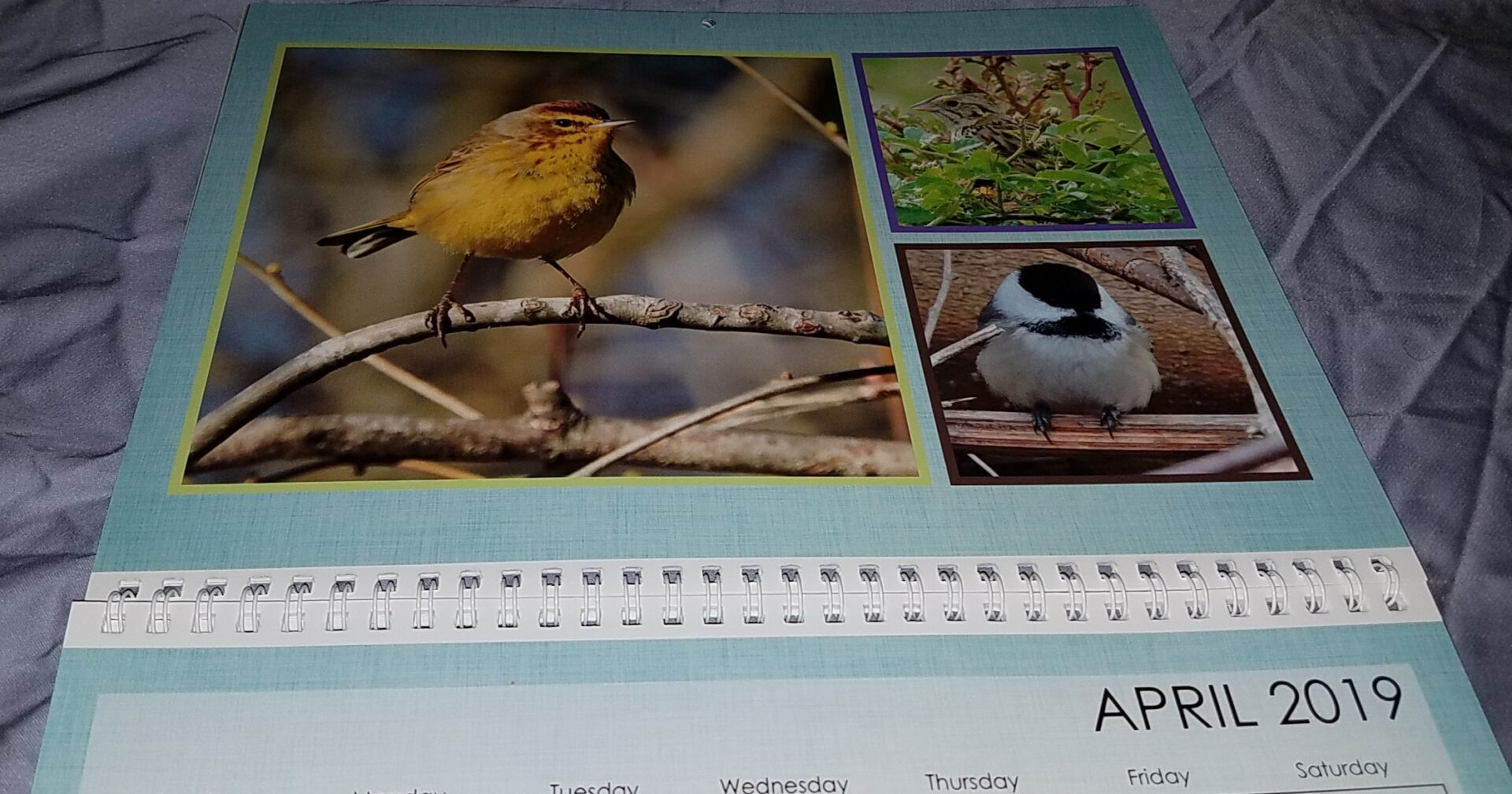 This Palm Warbler is a nice spring bird for April! Sporting it's nice breeding plumage!
